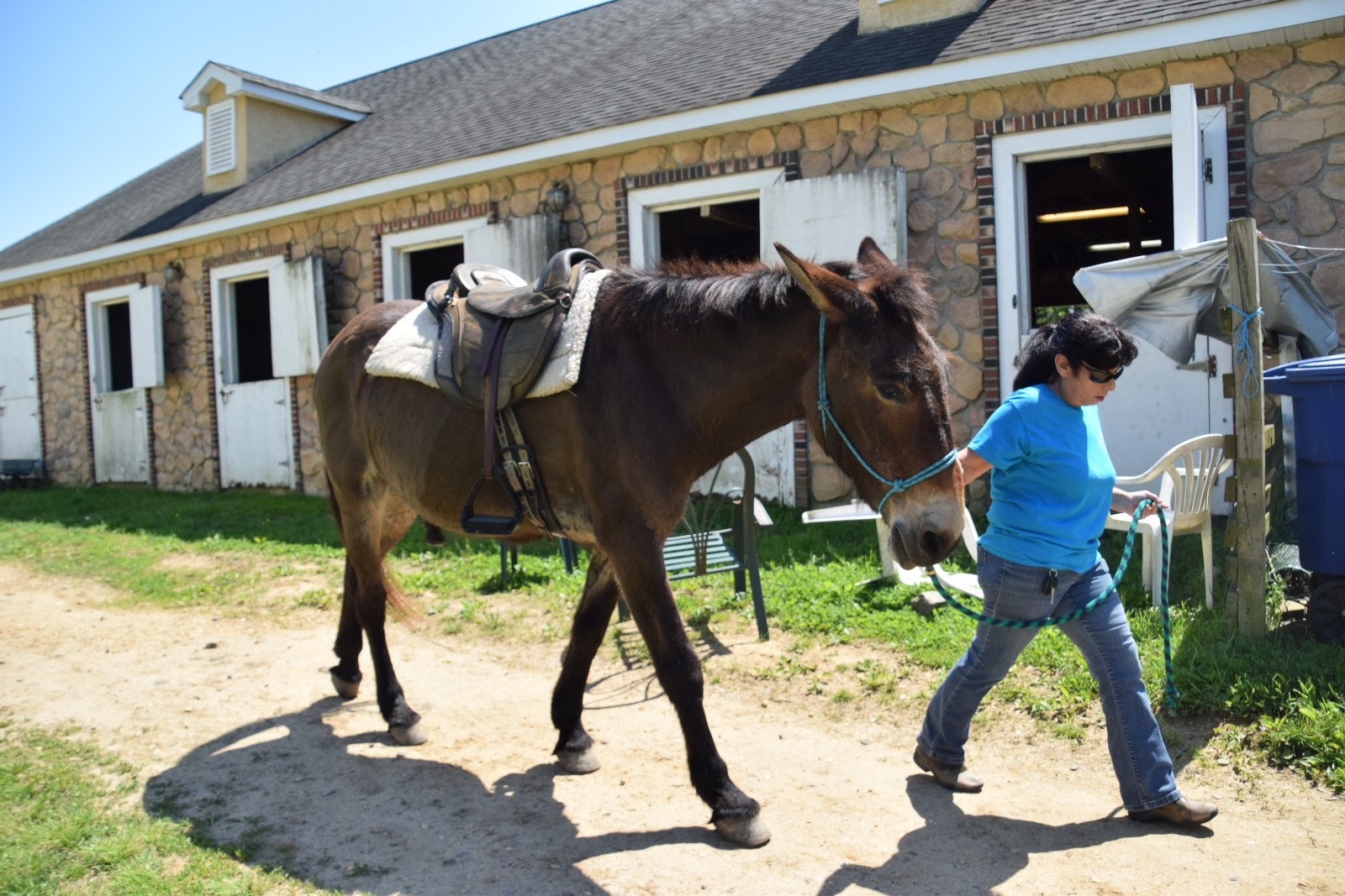Equine physical therapy - Cheryl Stevens Leads Mule Lazer To His Equine Therapy Session On Wednesday May 17 Lazer Is One Of Several Animals At Majoda Stables In Moorestown Used For