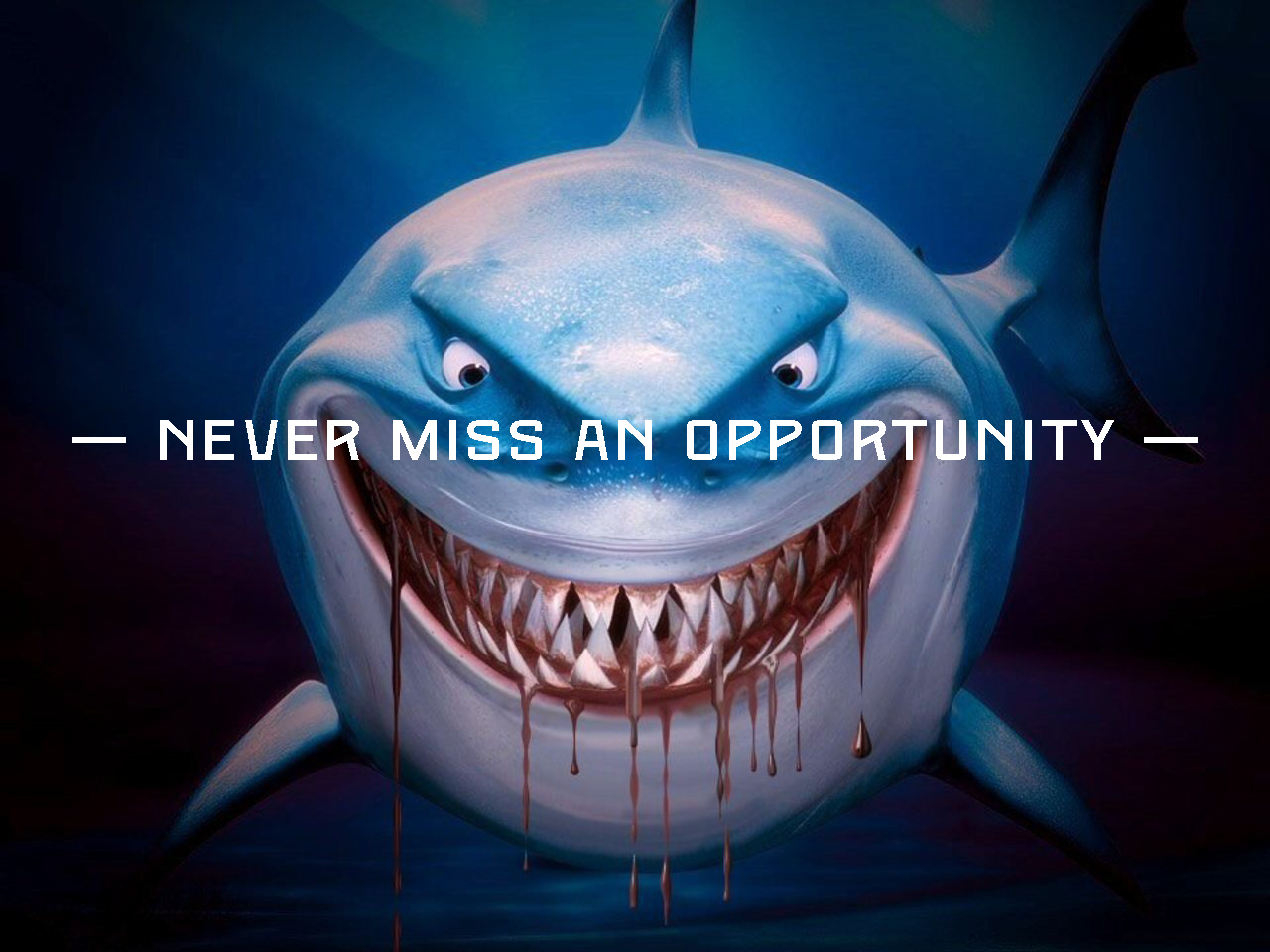 be more shark sarah fox medium never miss an opportunity