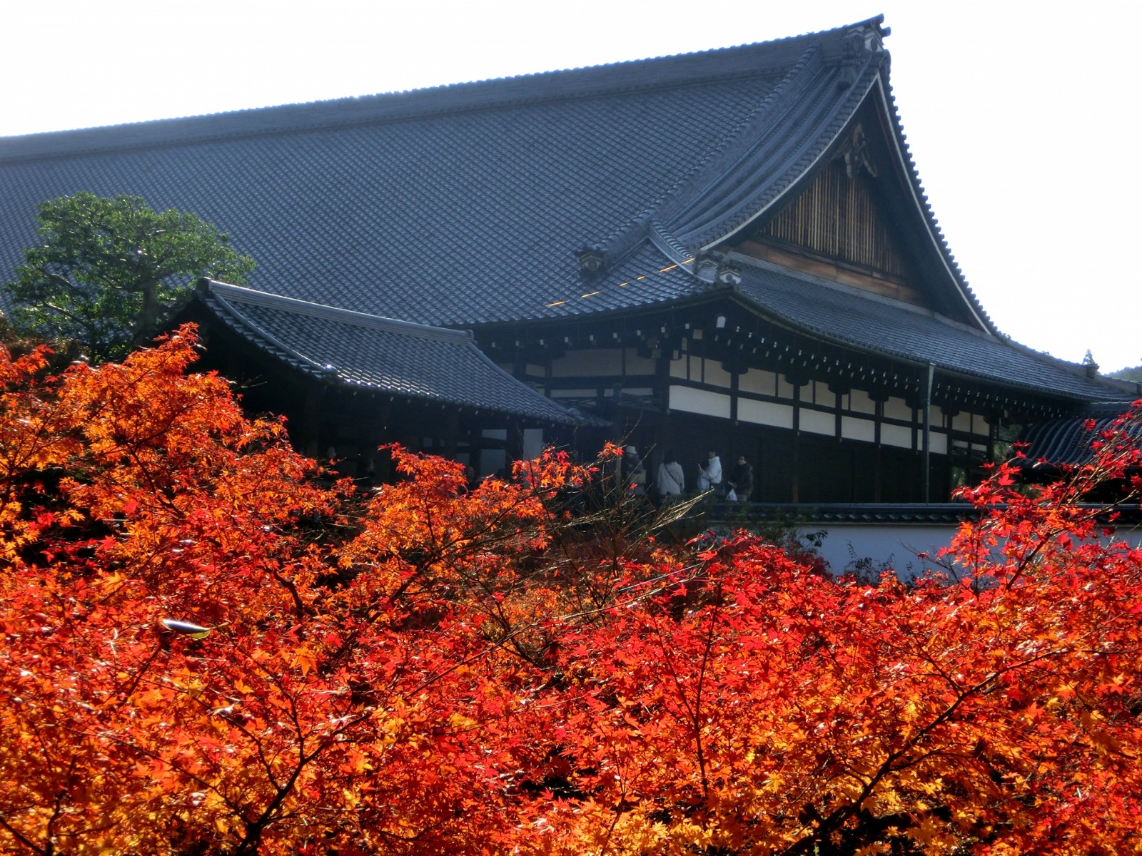 Image result for kyoto autumn