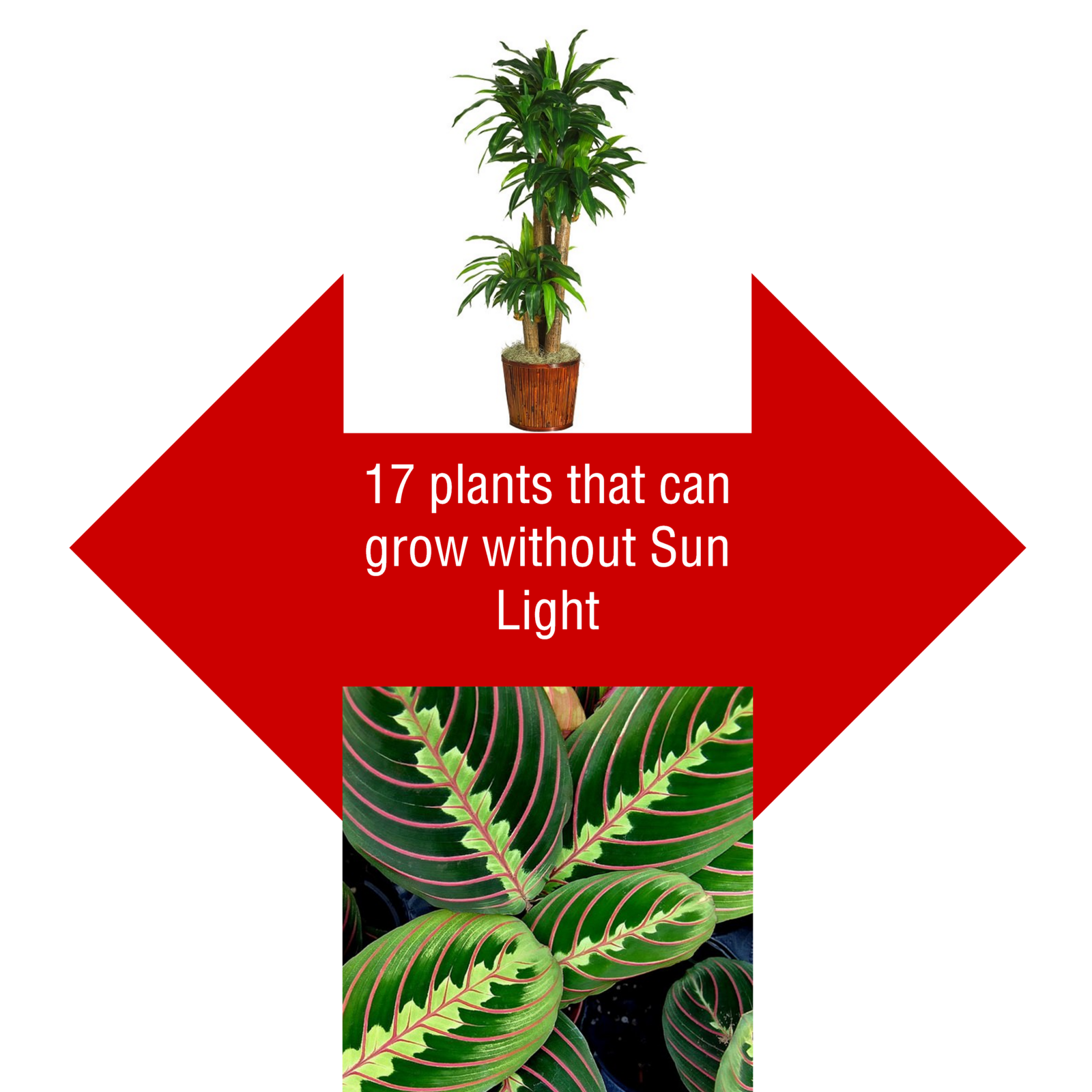 100 Indoor Plants That Don T Need Sunlight How To