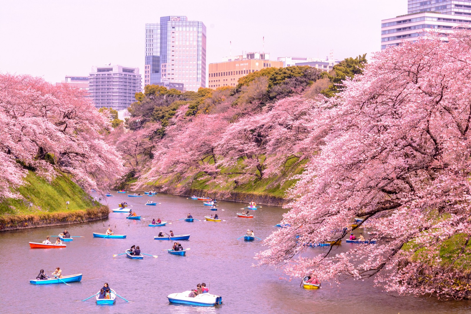 dd0df509a4bd Top 10 Things to Do in Japan in April – Japan Travel Guide -JW Web Magazine