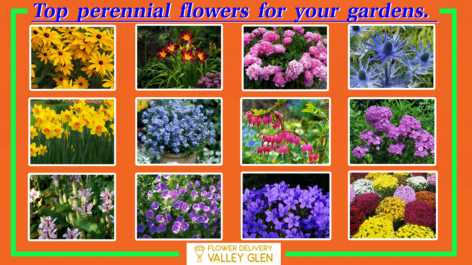 Top perennial flowers for your gardens sarah picard medium since there is a very long list of perennial flowers out in the market it is very hard to choose the best among them mightylinksfo