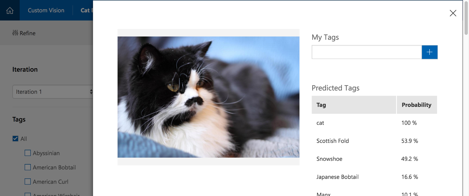 Which cat breed is this A more plex test case for the