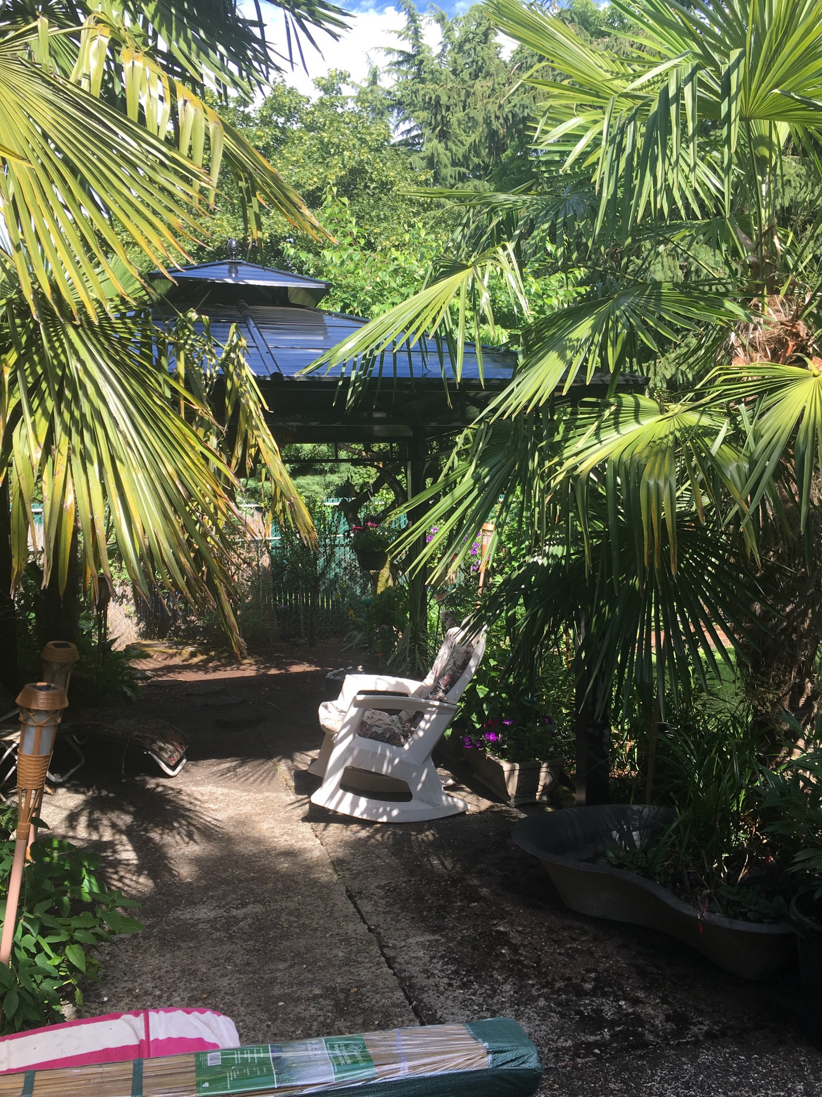 tropical gardens with bananas and palm trees in portland oregon