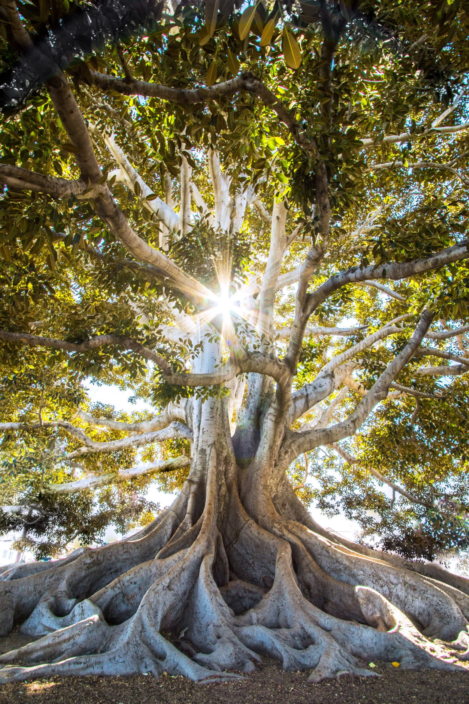 The Wisdom of Trees, In Quotes and Poems - Crystal Jackson ...