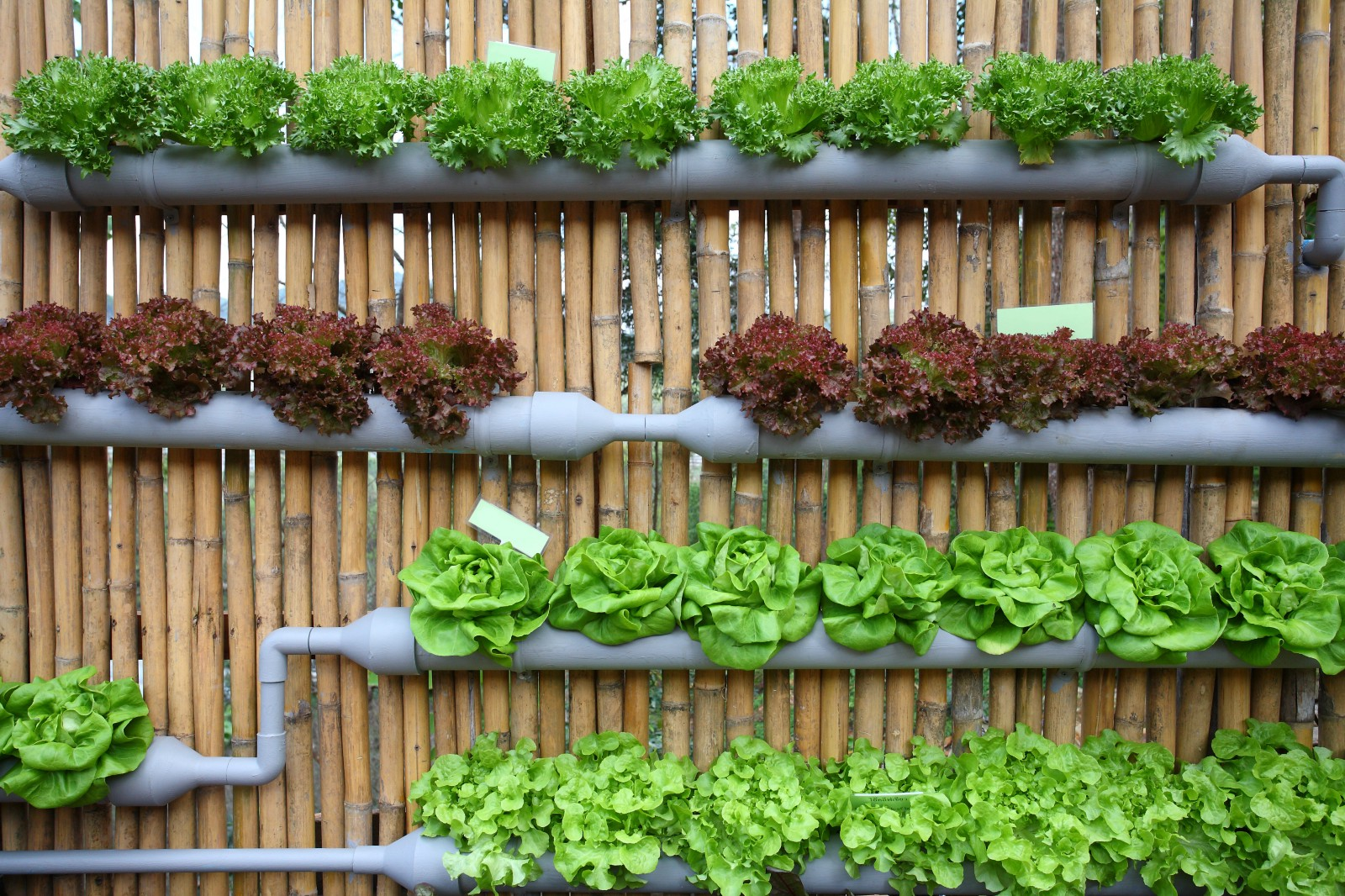 Designing a Renewable Food System