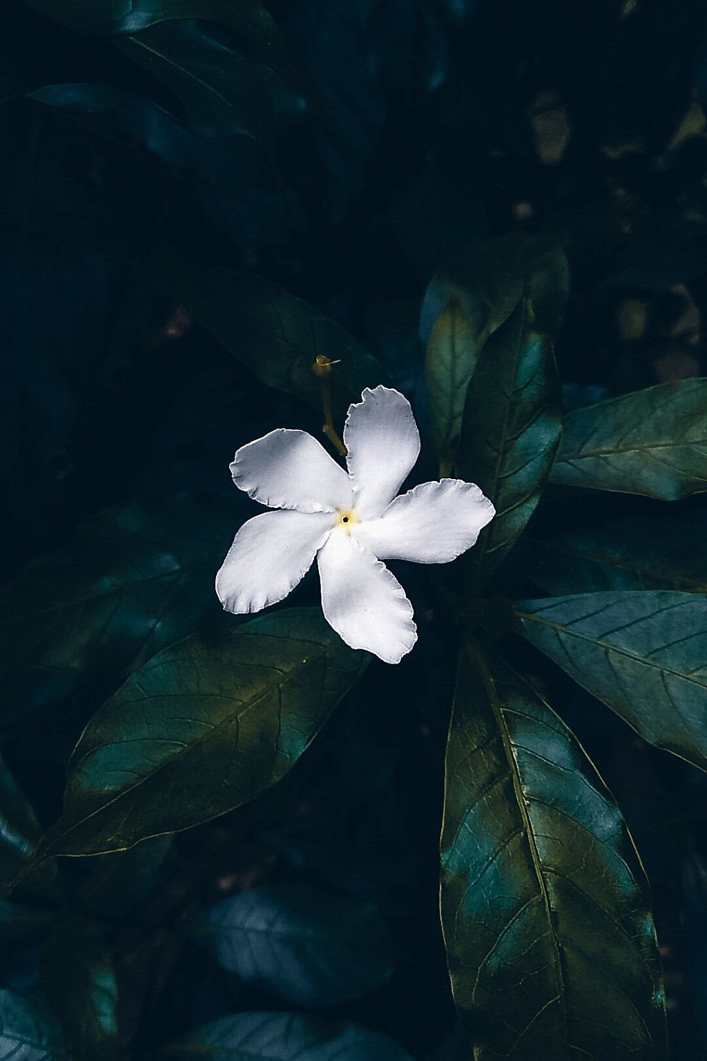 16 Amazing Flower Photos That Describe The Beauty Of Nature