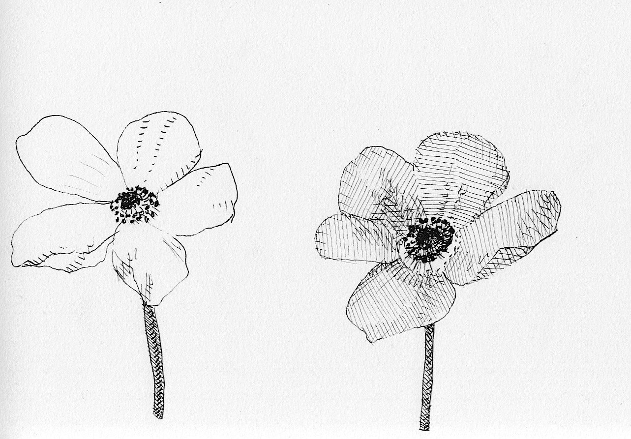 Daughter of the wind garden variety medium in egypt and persia anemones were thought of as emblems of sickness while the chinese called them the flower of death izmirmasajfo