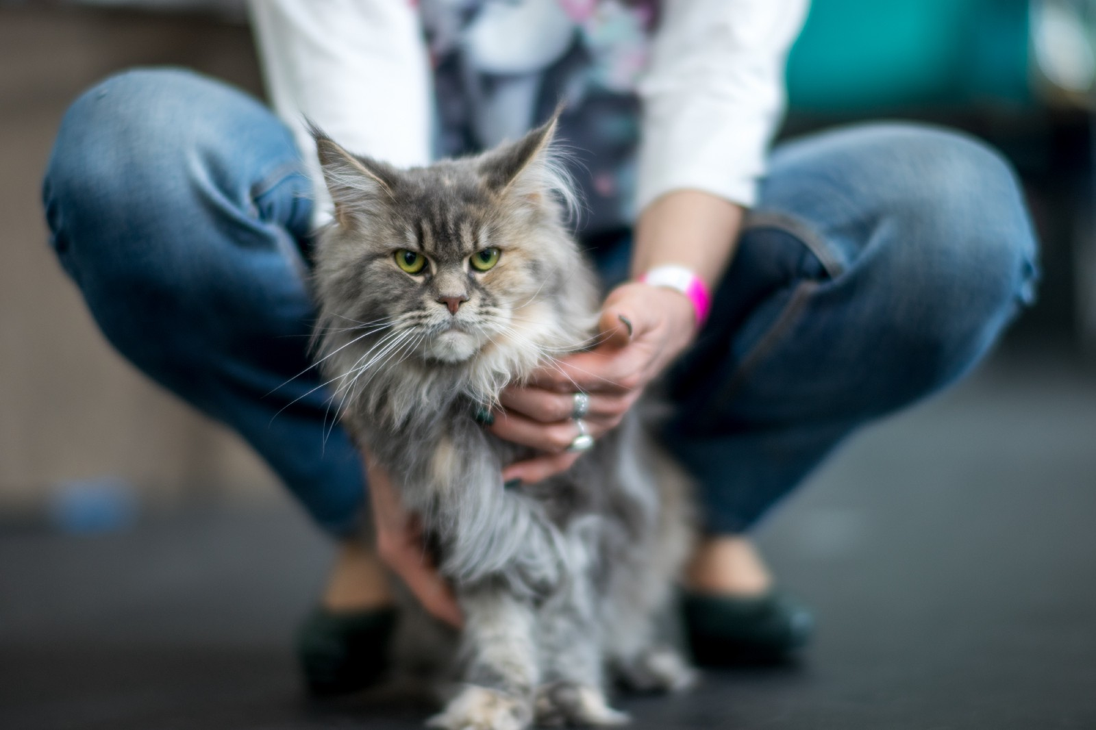 reducing cat stress during veterinary visits - HD1600×1066