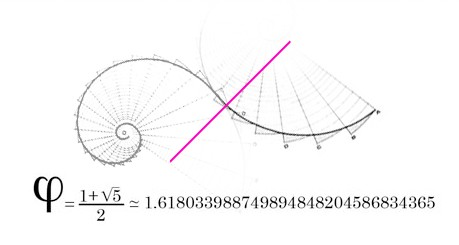 2 golden ratio arcs converged by a phase limit (pink line)