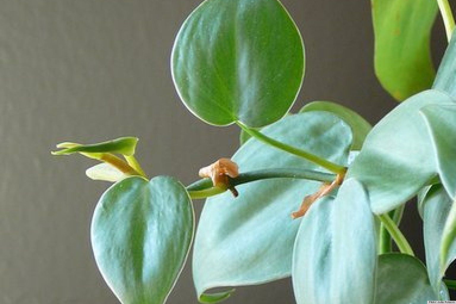 10 AMAZING INDOOR HOUSEPLANTS THAT GIVE OUT OXYGEN, EVEN DURING THE NIGHT : GARDENING