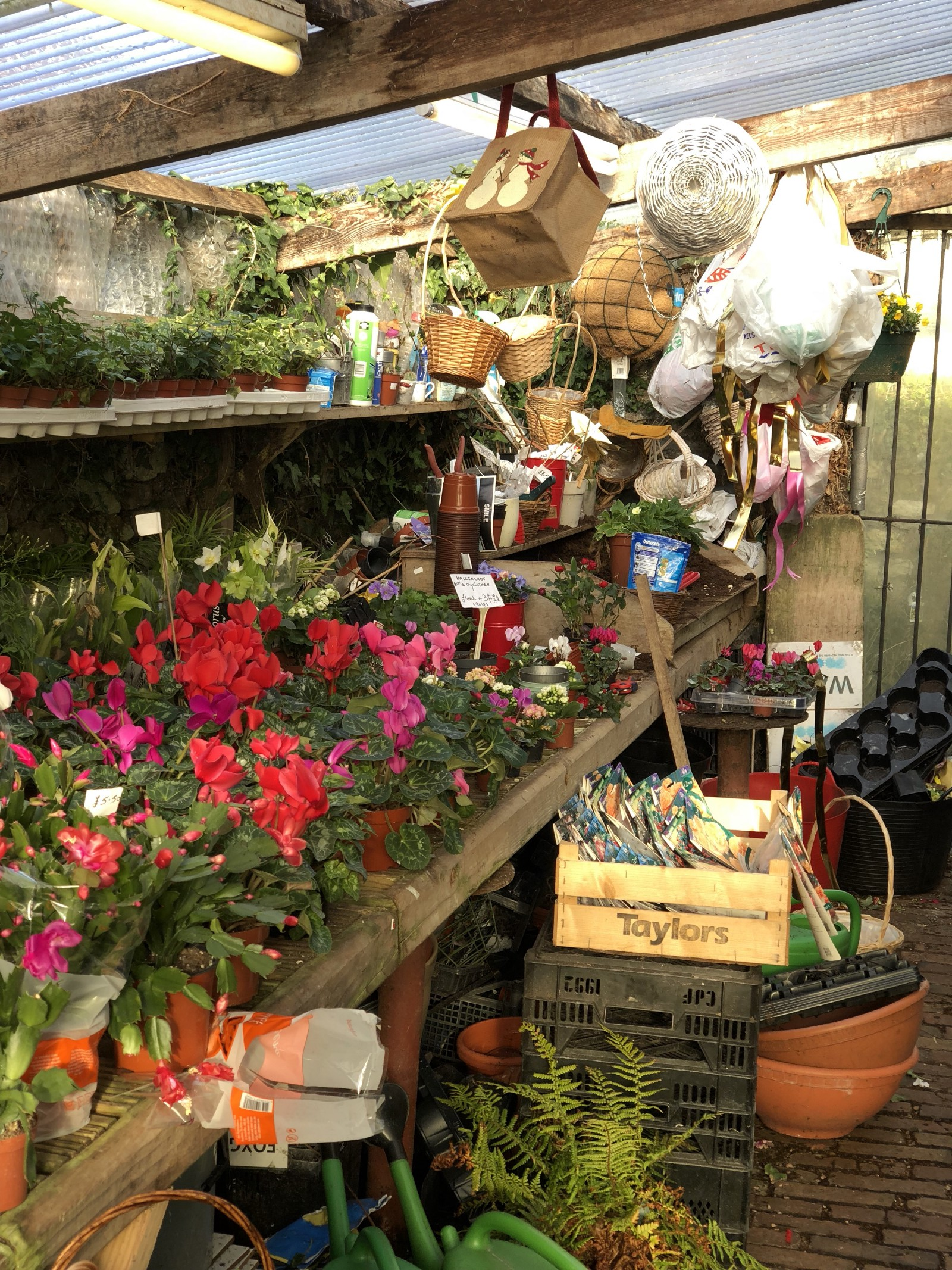 Just 5 Things — Thornbury Garden Shop – All Things Thornbury – Medium