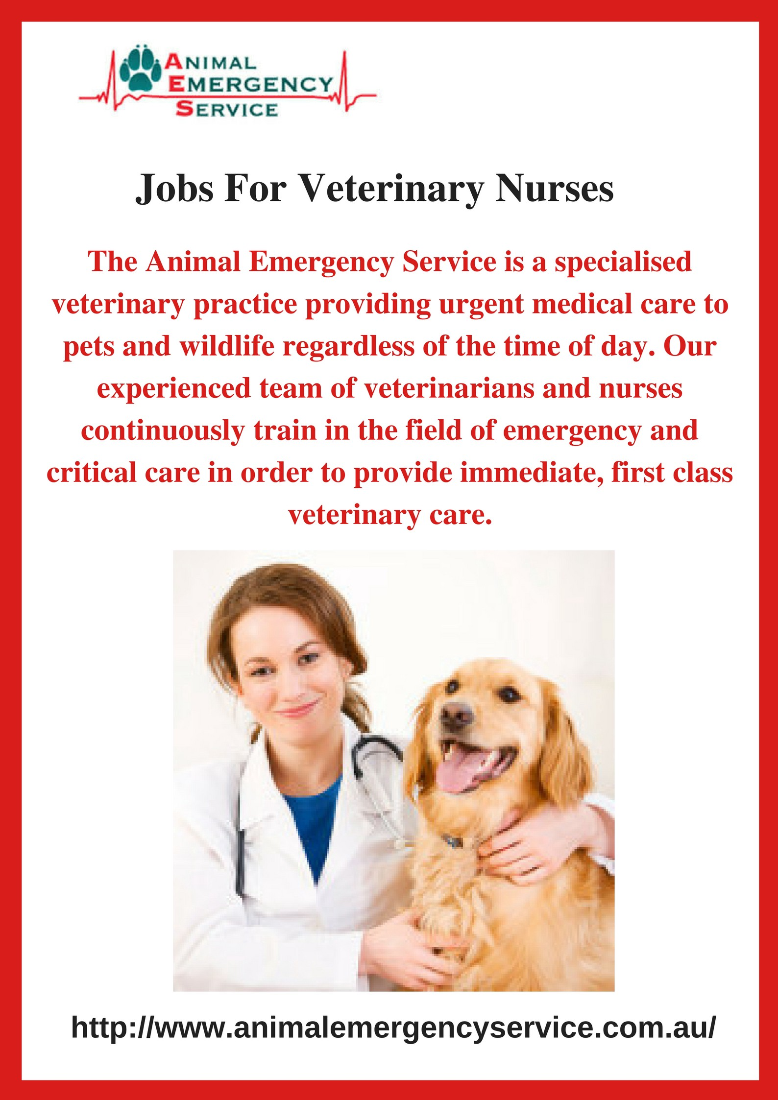 Jobs For Veterinary Nurses – Animal Emergency Service – Medium