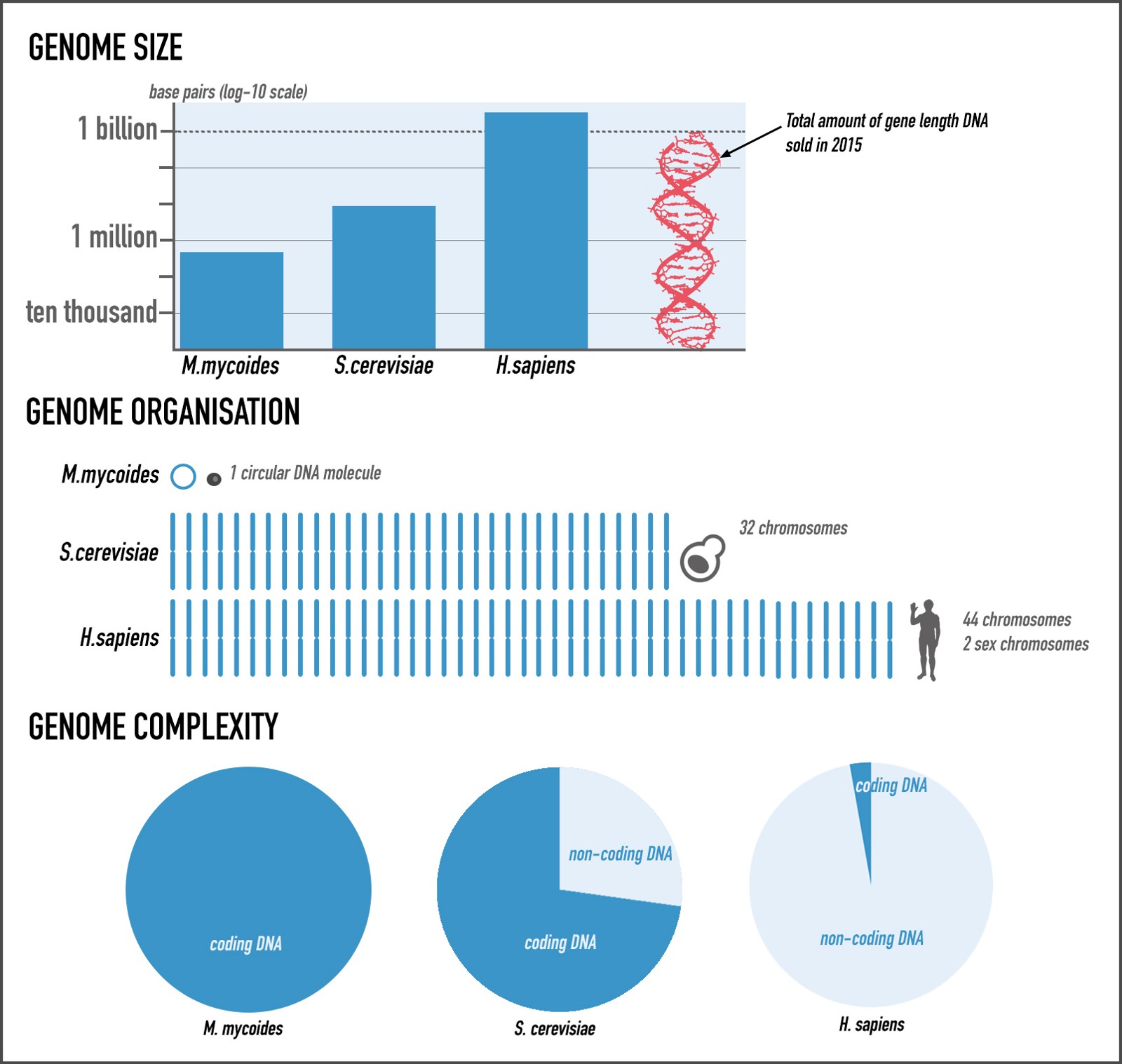research paper human gnome The ultimate goal of the human genome project is to at least 18 countries have established human genome research programs some of the larger programs are.