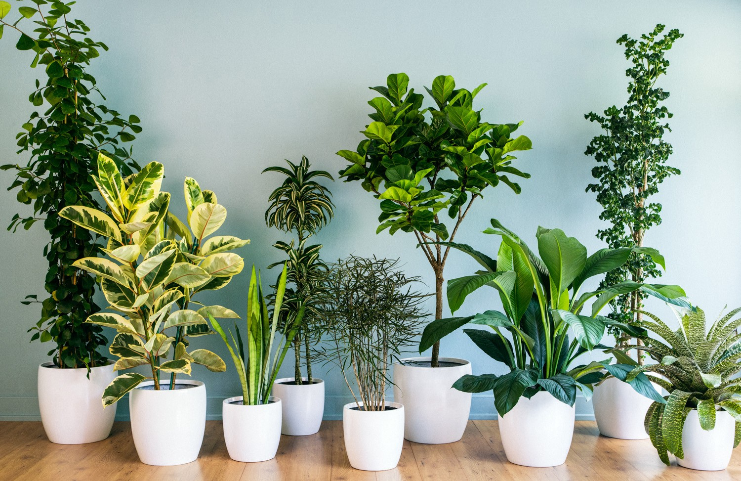 10 Amazing Air Purifying Plants for Indoors, and How to incorporate them into Your Interior Design