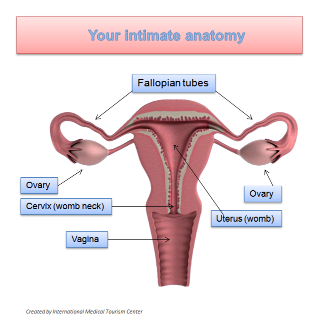 Say What Doc 11 Ob Gyn Words Every Woman Should Know