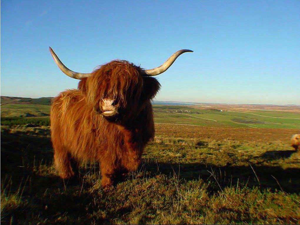 Image Of A Yak: A Guide To Yak Shaving Your Code