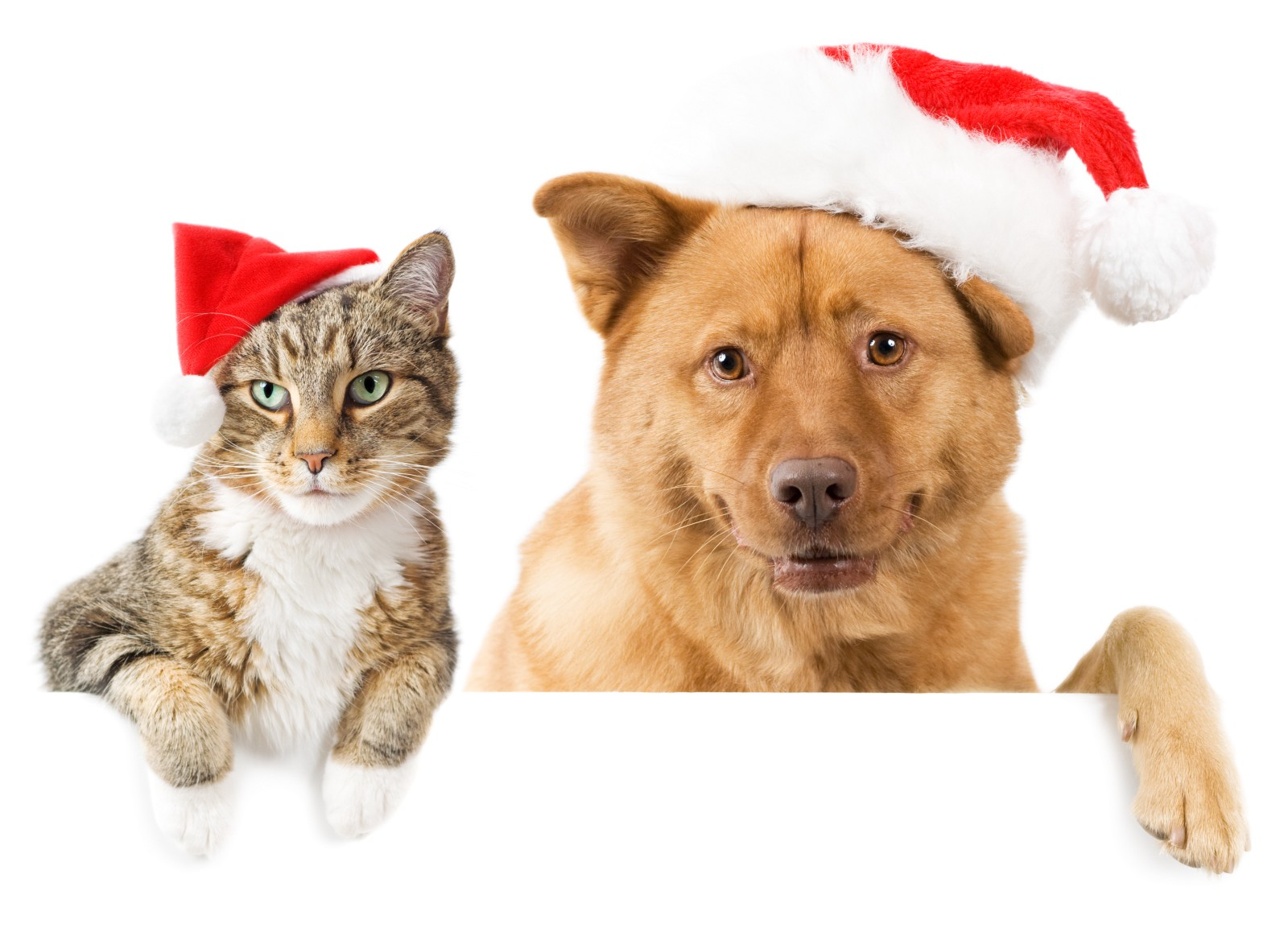 How to get your pets in the holiday spirit vet supply source medium how to get your pets in the holiday spirit m4hsunfo