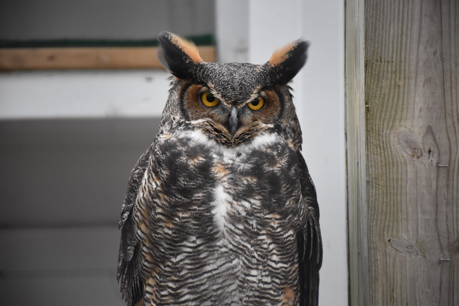 the day of the owl reflection Pictures of the day: who saw his own reflection in the owl's pupils the retired civil servant stood completely still so not to spook the enormous owl.
