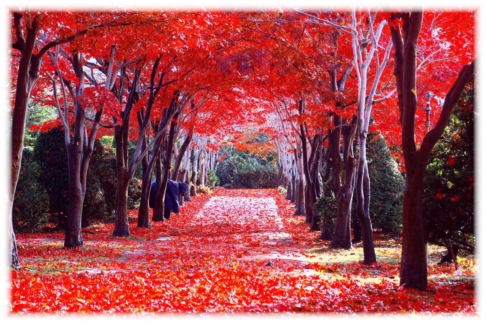 Best Time To Travel To Japan In Fall