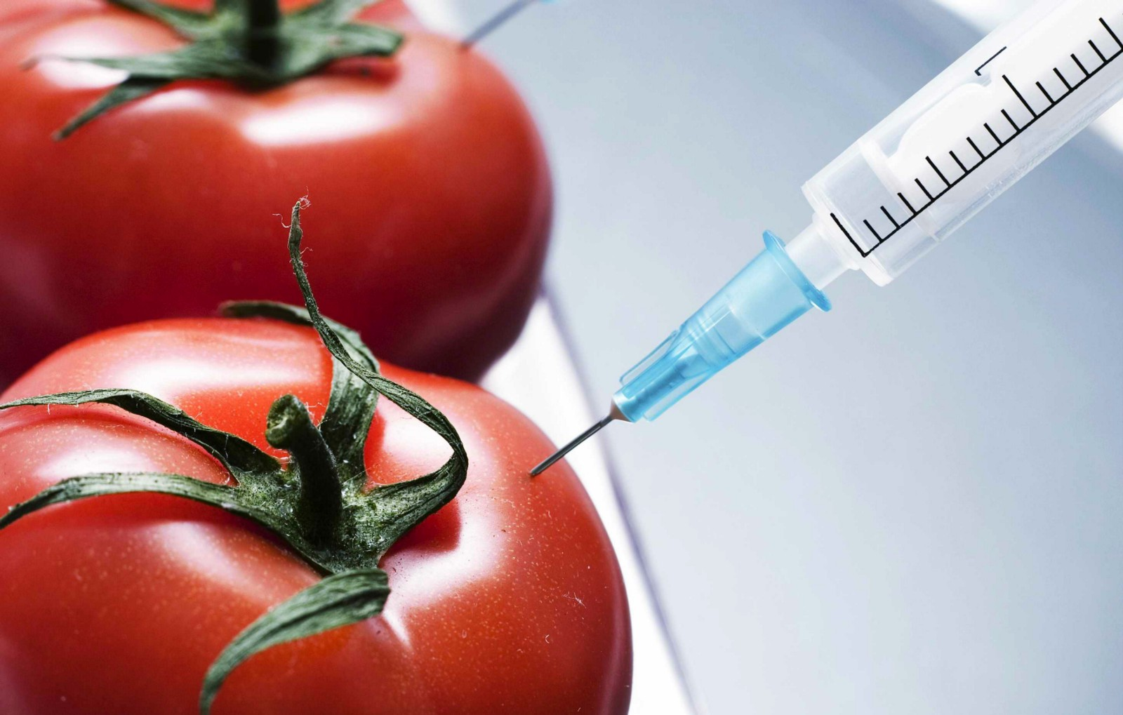 the controversy surrounding genetically modified organisms