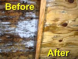 You Need To Consider The Health Problems Ociated With Mold Infestation And Try Fetch Quick Removal Istance Molds Have Been Known Cause