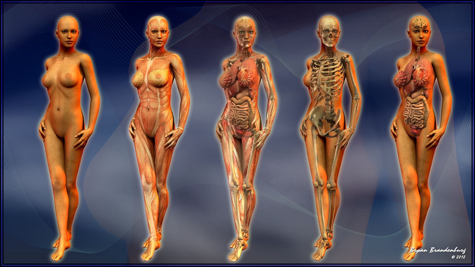 Female Anatomy Models Educating Women About Their Bodies