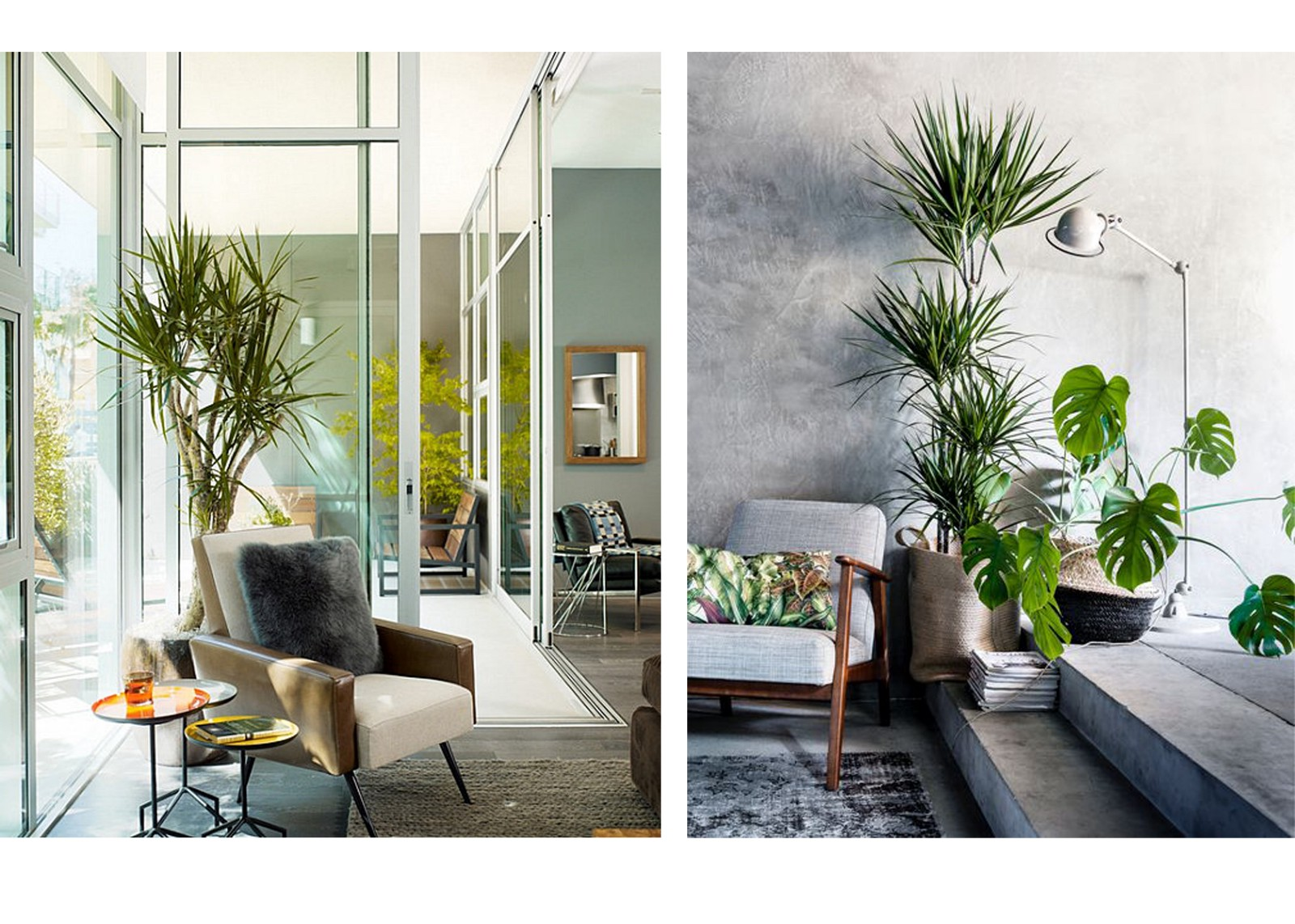 How To Use Plants In The Interior Basics Of Interior Design Medium