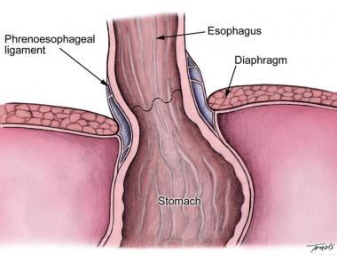 Nutrition and digestion mdash Mouth pharynx and esophagus