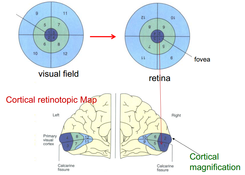 Maps in the brain disability science review medium 1ybrghpwph8lohlh9pw1tqgg ccuart Images