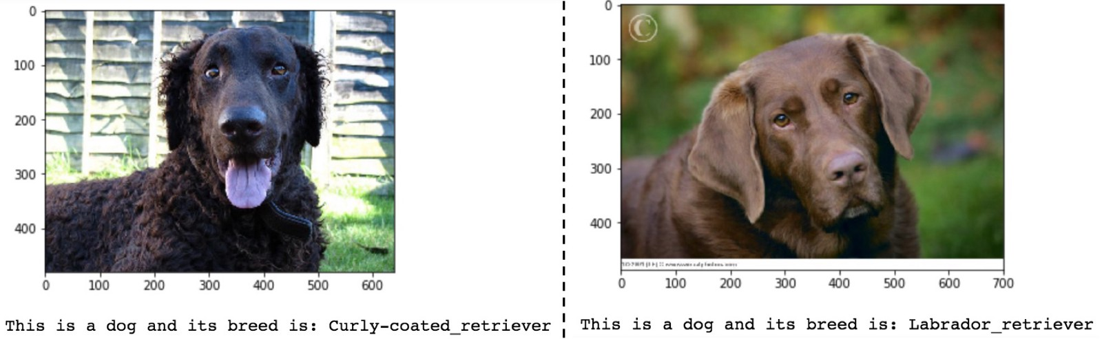 Build Your First Deep Learning Classifier using TensorFlow: Dog Breed Example