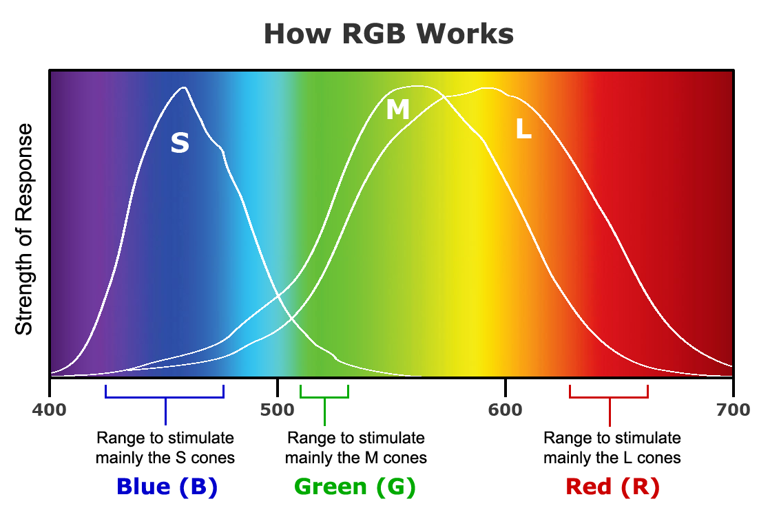 The Contradictions In How We Explain Colors Philipendium Medium As Can Be Seen From Above Diagram Radio Wave Band Is Further Included Because Red Light Stimulates L Cones Much More Strongly Than It M Or S However You See