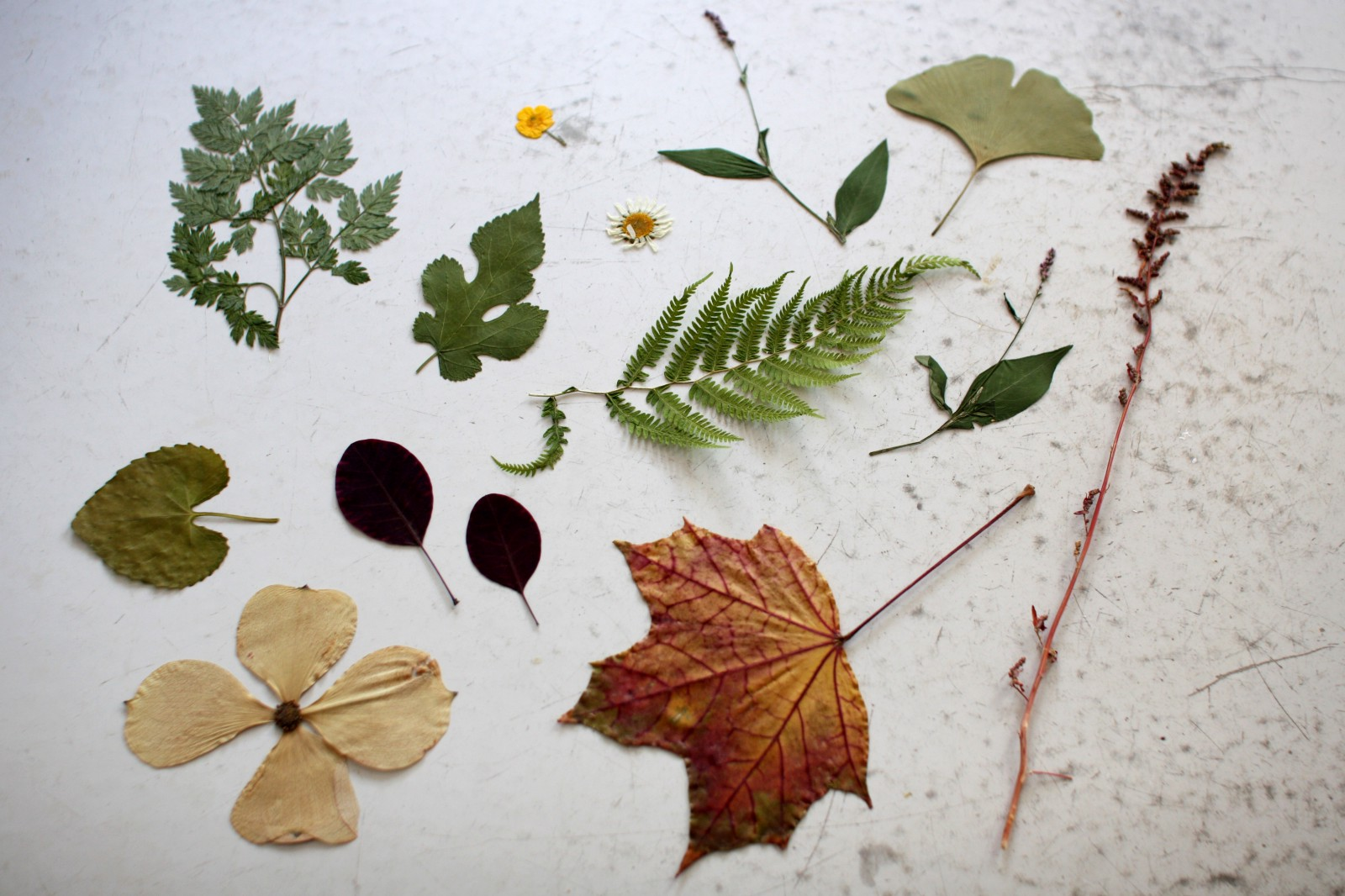 How to make a herbarium with your own hands Herbarium in biology. Herbarium of leaves 60