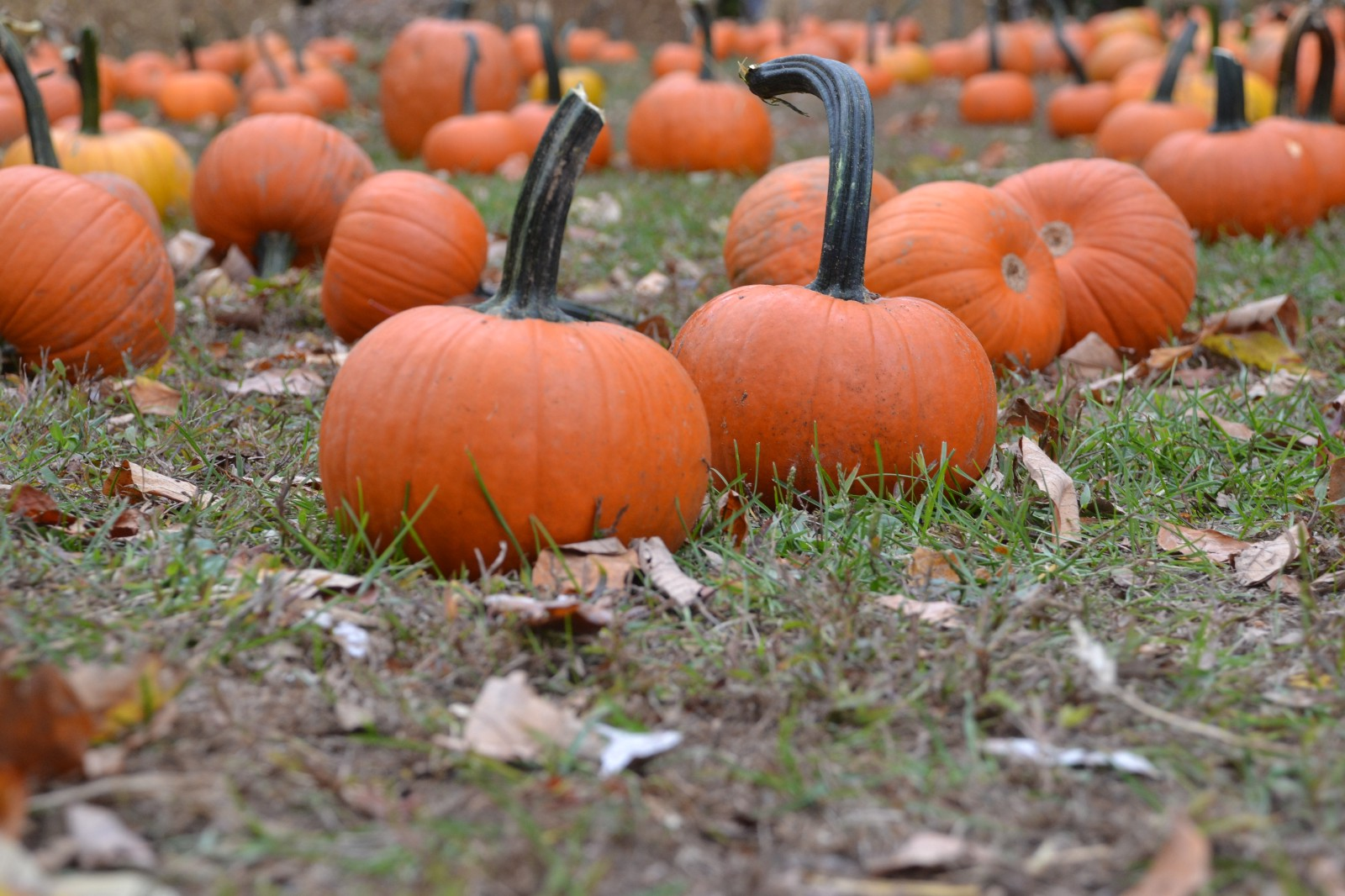 beer garden pumpkin bowling newest additions to cherry hill