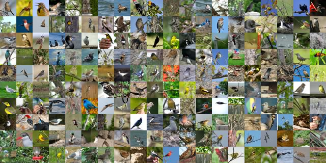 Dataset of birds