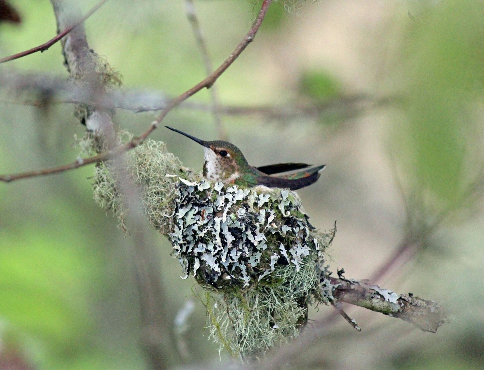 Be on the lookout for bird nests - Updates from the U.S ...