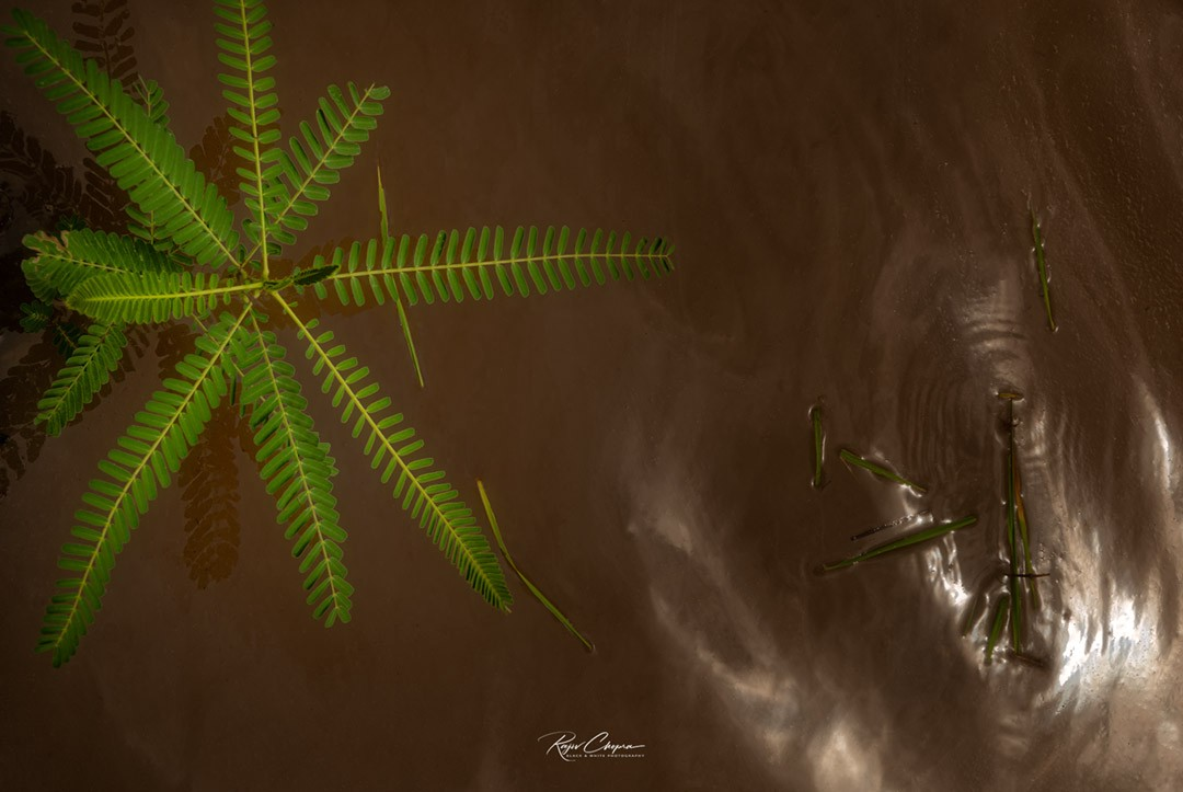 A plant in muddy water