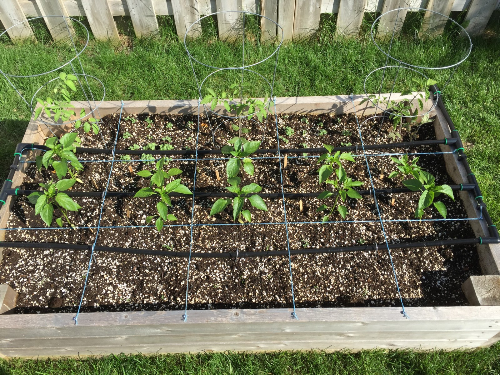 Raised Garden Beds, Planted With 3 Tomato Plants And 10 Pepper Plants,  Separated Into 15 Squares With Drip Line Irrigation In Three Lines Across  The Length ...