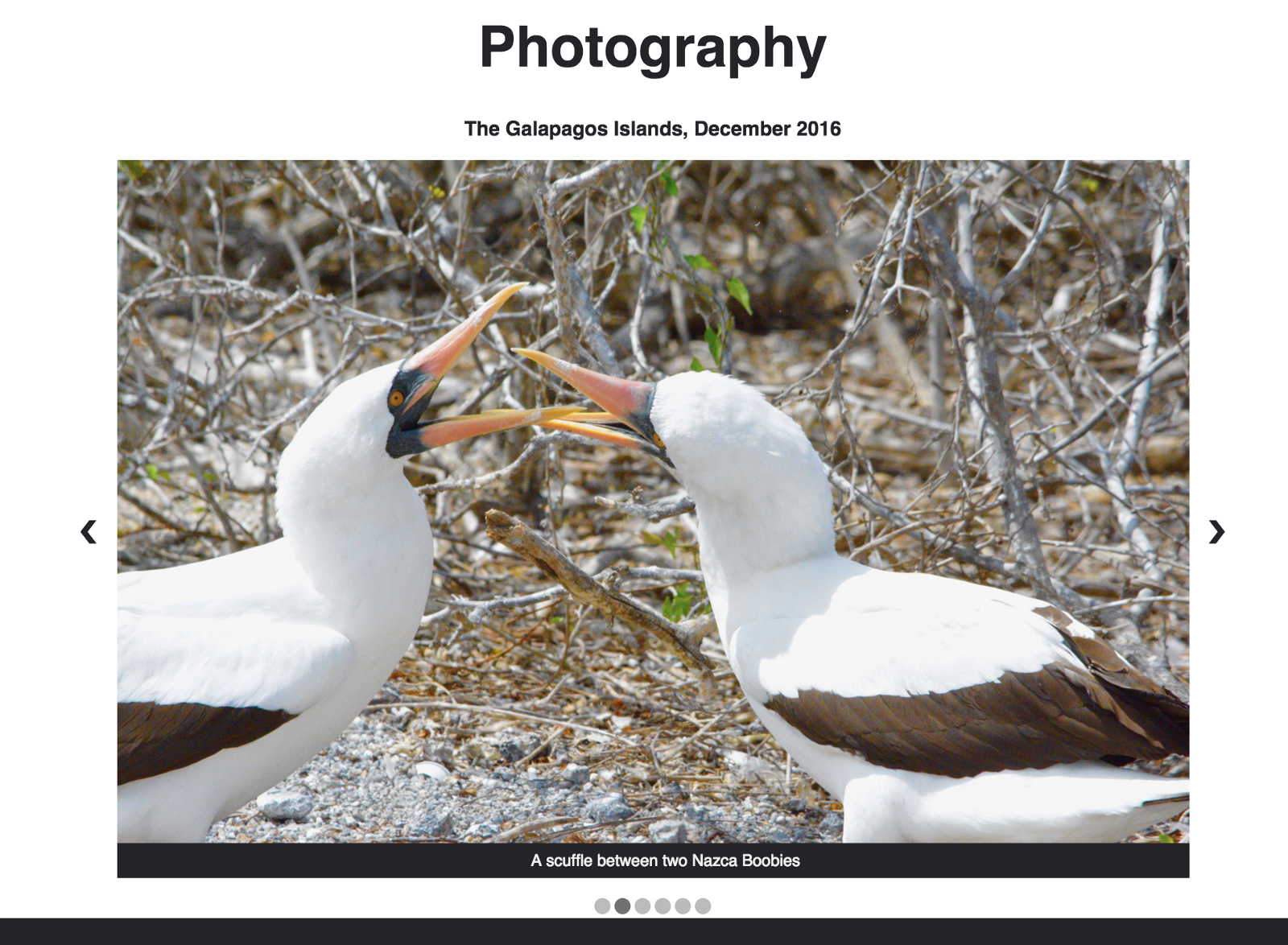 Slide Show Of Some Of My Bird Photos >> Make A Slideshow With Automatic And Manual Controls Using Html Css