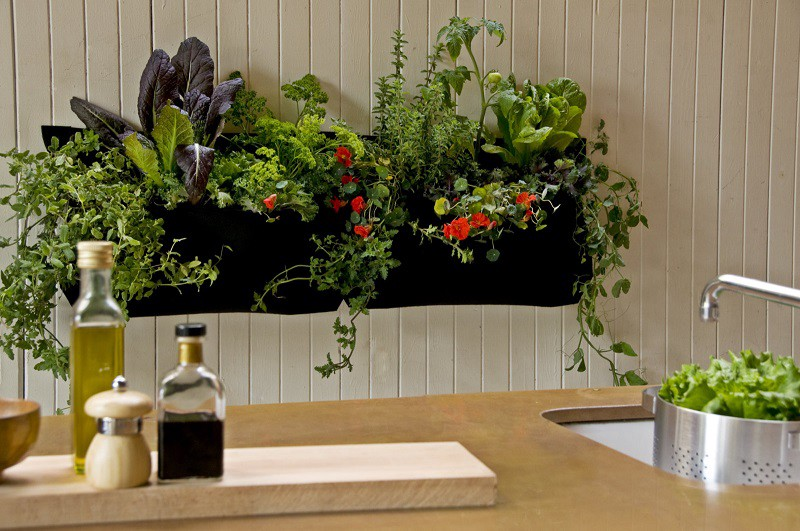 13 AMAZING IDEAS FOR YOUR INDOOR PLANTS