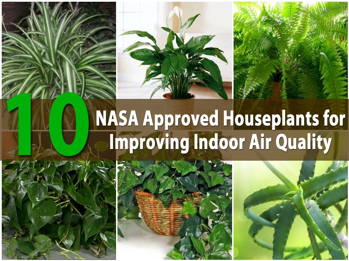 NASA Approved This Plant as Best Humidifying Plant For Your Home : Houseplants