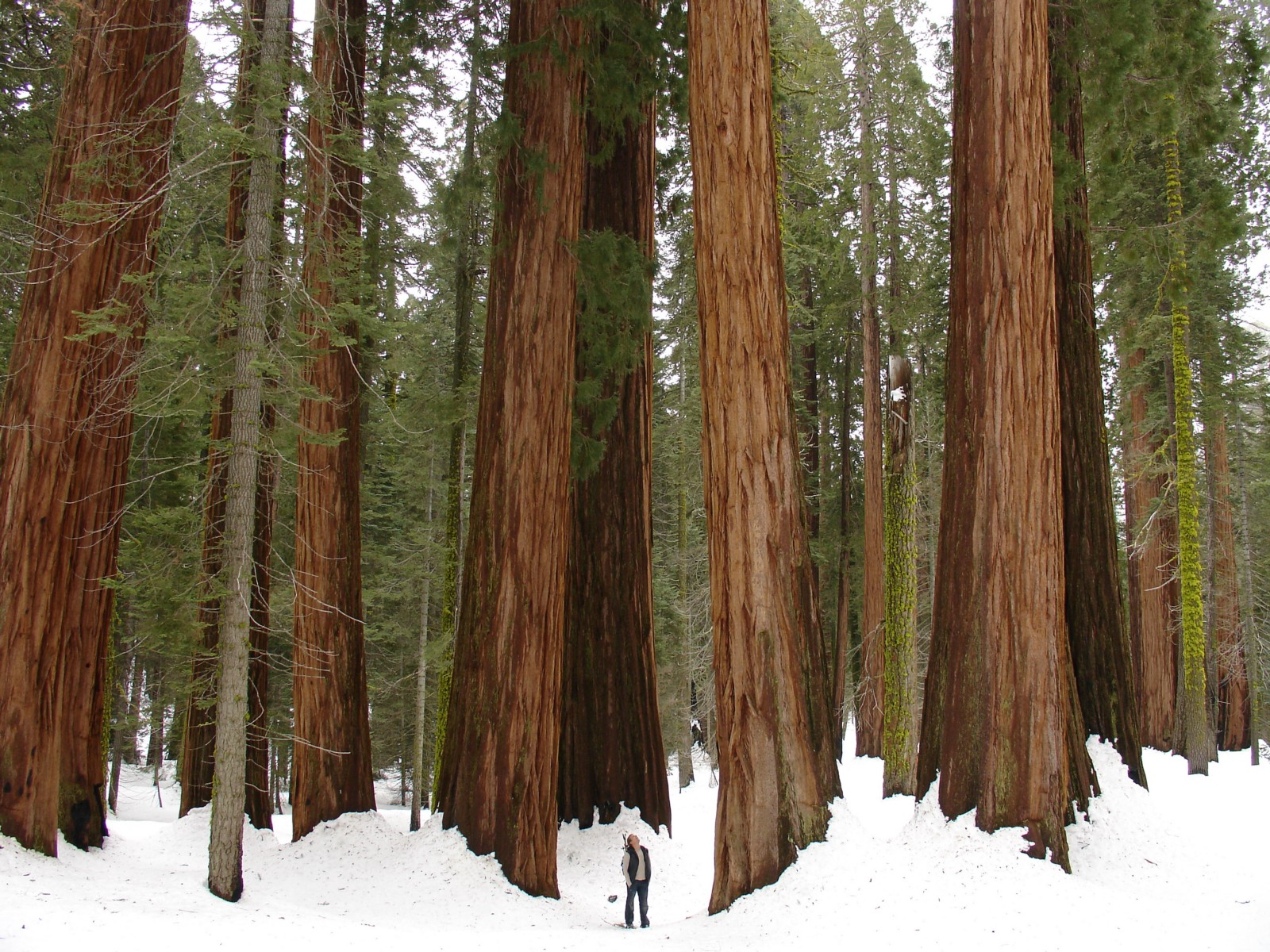 2a3f4691471 Your Winter Guide to Northern California Vacations – The Bold Italic