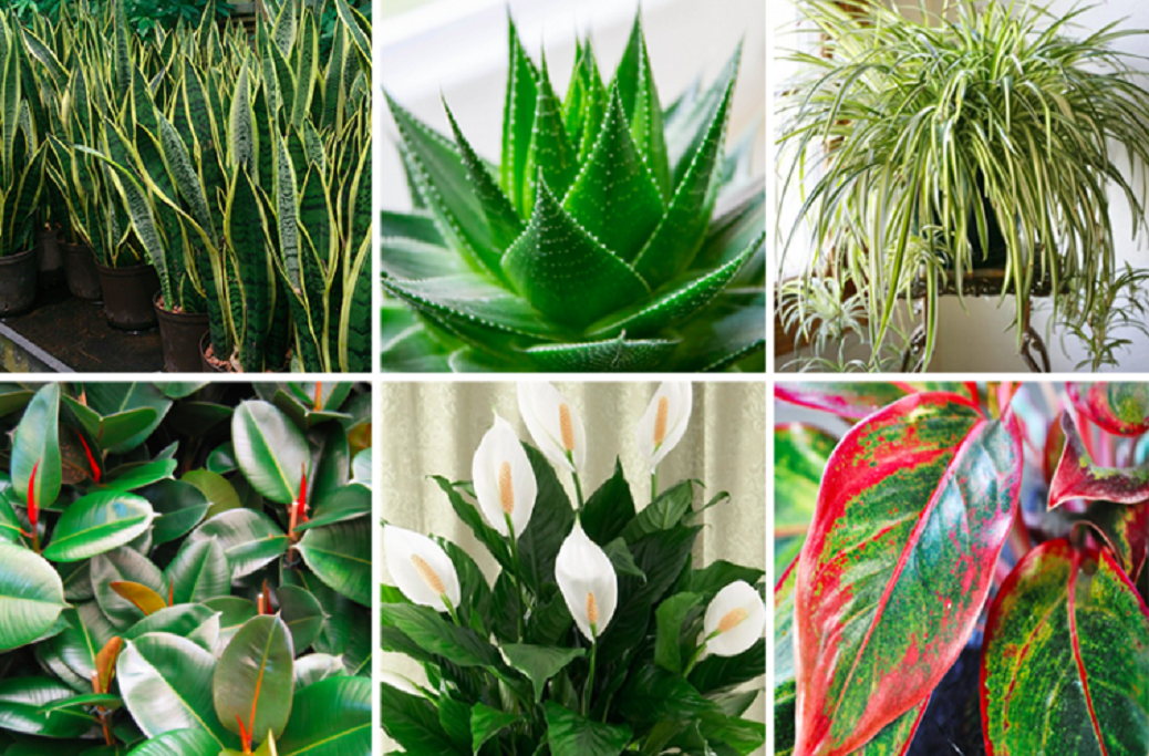 THESE HOUSEPLANTS ARE OXYGEN BOMBS & THEY CLEAN THE AIR IN YOUR HOME : DECORATION