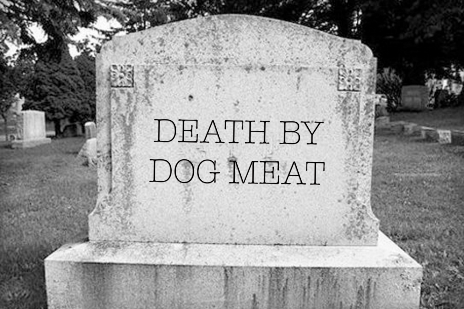 3 Reasons Why Eating Dog Meat Can Kill You – Lee Fox-Smith – Medium