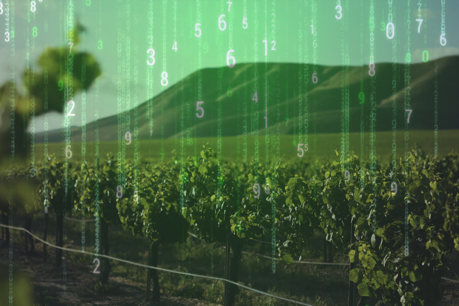 The Terroir of Data – Creative Analytics