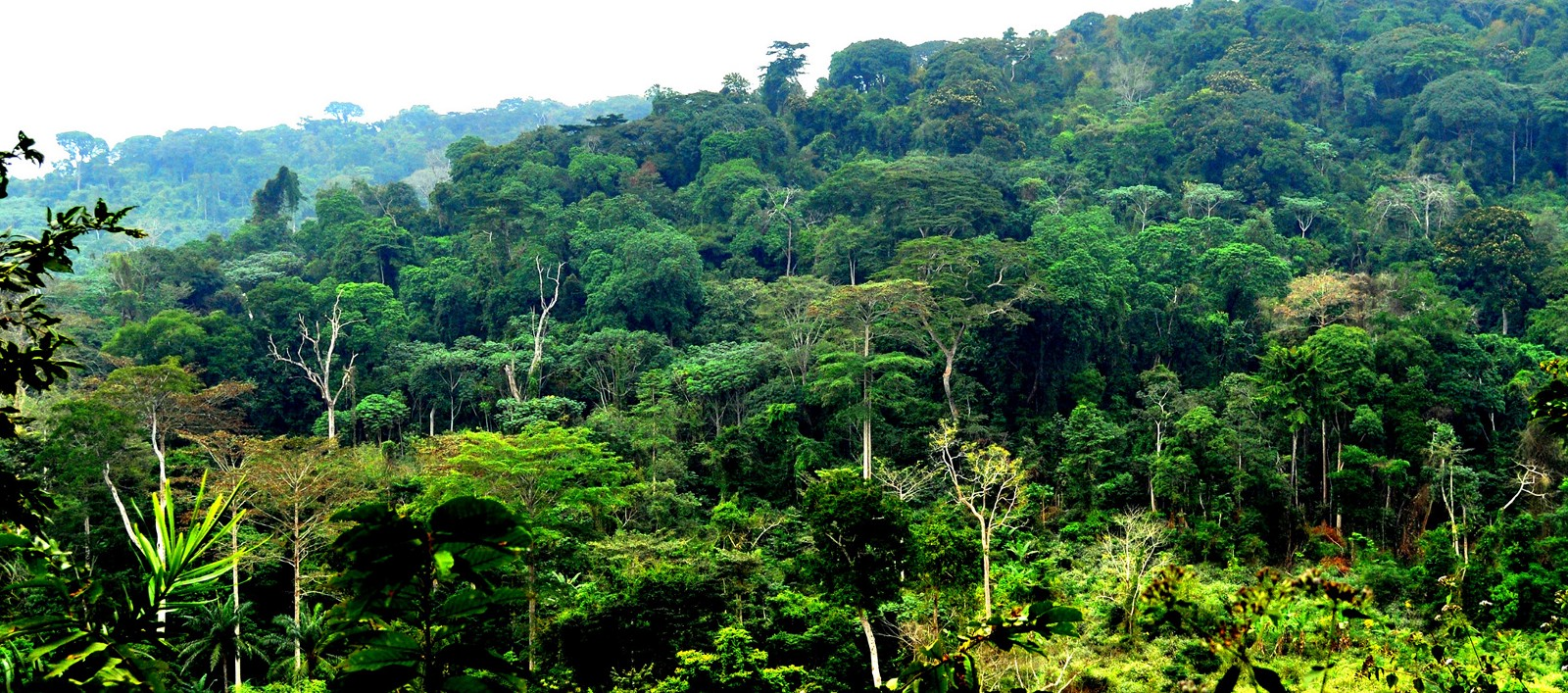 APA Project douses tensions in Congo Basin rainforests - APA |Congo Basin