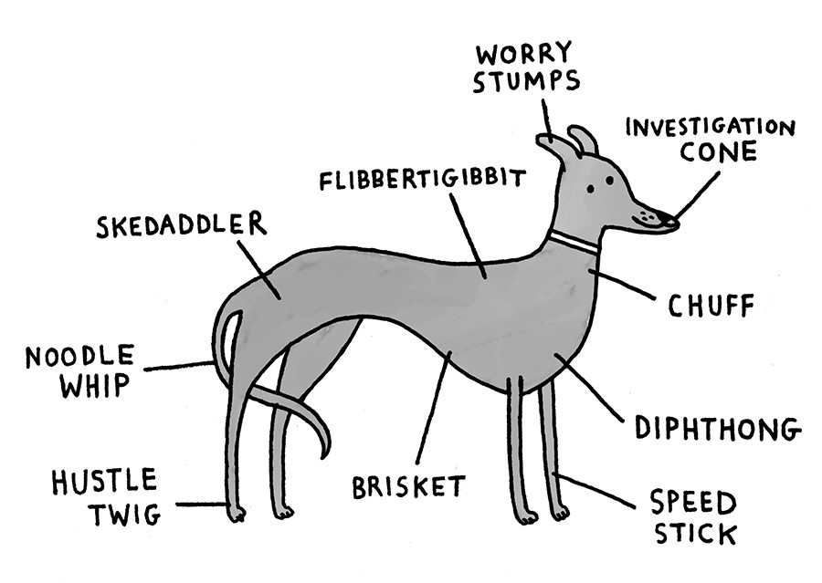 Breed-Specific Canine Anatomy – I Love Charts – Medium