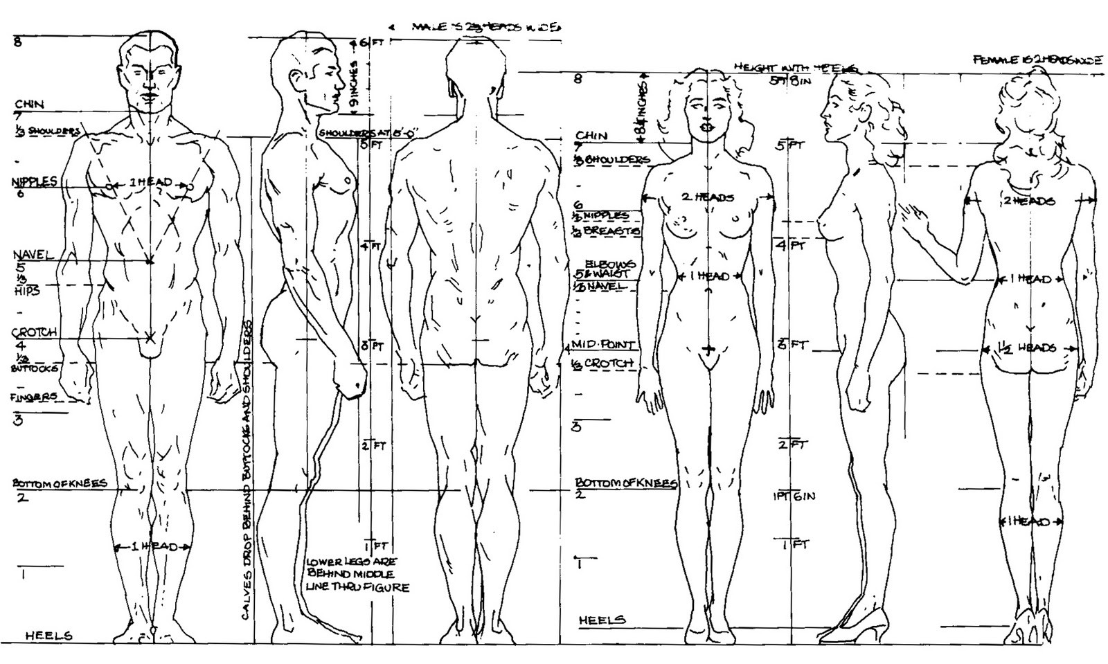 Beginner S Guide Importance Of Proper Body Proportions And How To