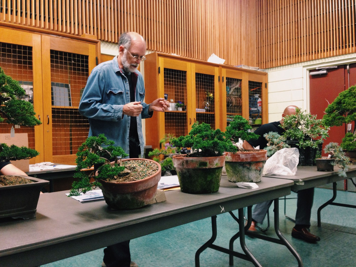 Bonsai An Inherited Passion Morning Light Medium Wiring Lesson Trees Receiving A Critique At One Of The Society San Francisco Meetings