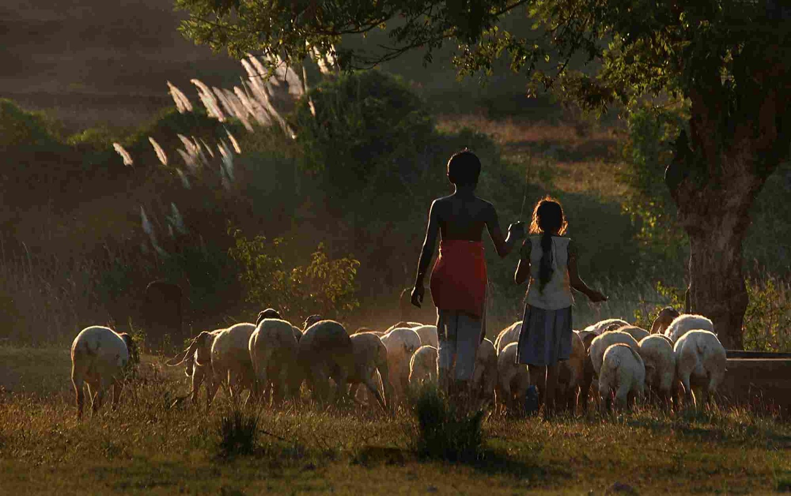 Image result for shepherdS IN KERALA FOREST